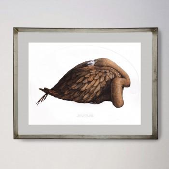 Phoenicopterus ruber 2